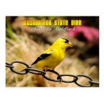 Washington State Bird - American Goldfinch Postcard