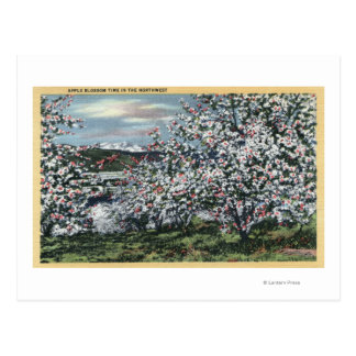 Washington - View of Apple Trees in Blossom Postcard
