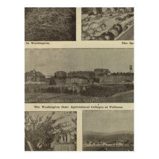 Washington's versatile thrift postcard