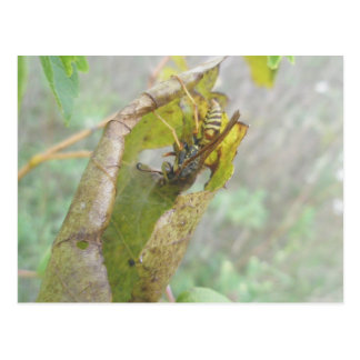 Wasp Checking Spider Web Postcard