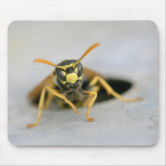Wasp emerging from its hole mouse pads