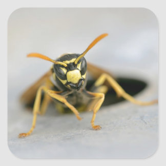 Wasp emerging from its hole square sticker