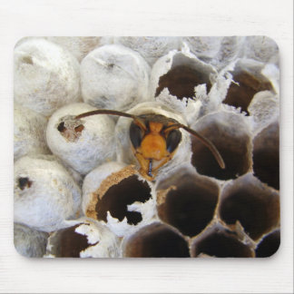 Wasp Emerging From Nest Mouse Mat