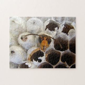 Wasp Emerging From Nest Photo Puzzle & Gift Box