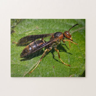 Wasp Jigsaw Puzzle
