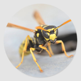 Wasp near from its hole classic round sticker