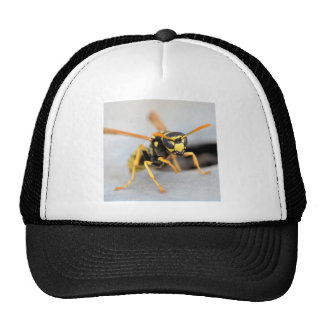 Wasp near from its hole trucker hat