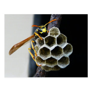 Wasp Nest and Worker Postcard 22cda938cb3e