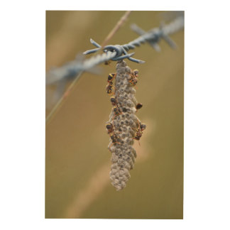 WASP NEST ON BARBED WIRE FENCE AUSTRALIA WOOD WALL ART