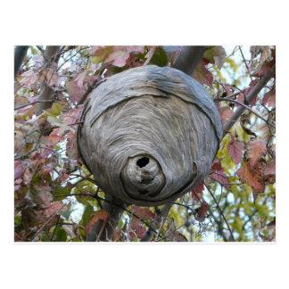wasp nest postcard