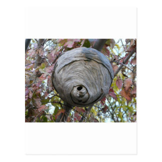 wasp nest post cards