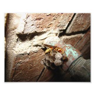 Wasp Nest, Print Art Photo