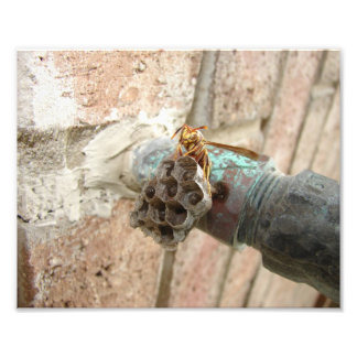 Wasp Nest, Print Photo
