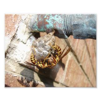 Wasp Nest, Print Photo Art