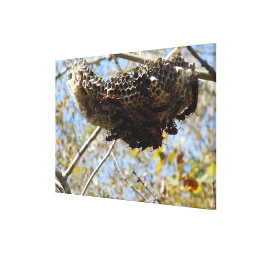 Wasp Nest! Yikes! Canvas Print