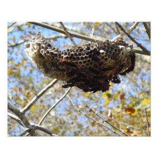 Wasp Nest! Yikes! Photographic Print