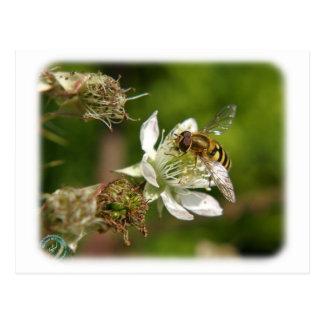 Wasp on a Bramble 9Y051D-019 Postcard