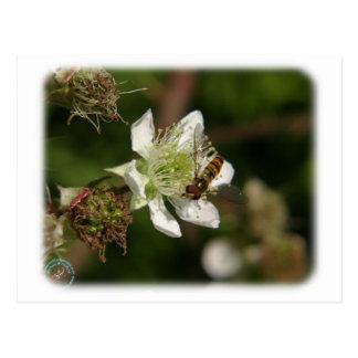 Wasp on a Bramble 9Y051D-024 Postcard
