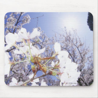 Wasp on Cherry Blossom, close up Mouse Pad