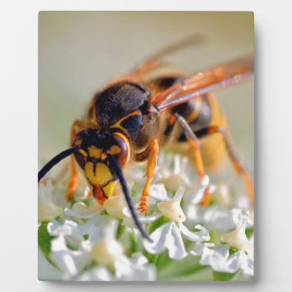 Wasp on white flower plaque