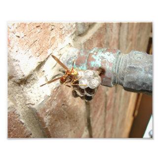 Wasp, Print Photo Print