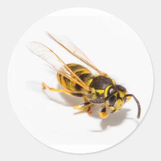 Wasp Round Stickers