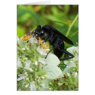 Wasp with a handlebar moustache! - Vertical Card