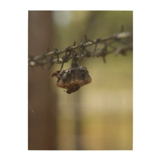 WASPS ON A BARBED WIRE FENCE QUEENSLAND AUSTRALIA WOOD WALL ART