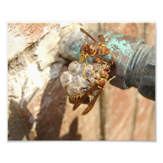 Wasps with nest, Print Art Photo