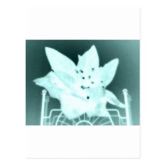Wasteland Goth Flower Postcard