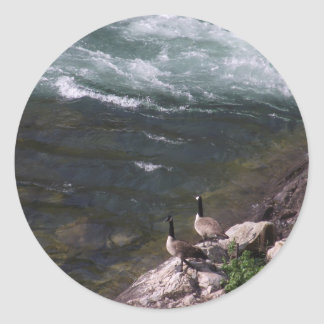 Watauga Lake and geese at Wilbur Dam Stickers