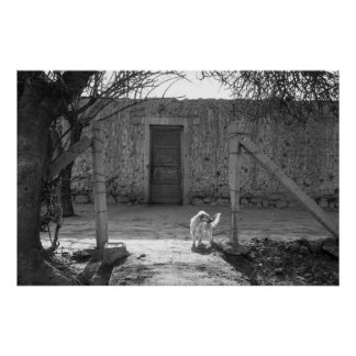 Watch dog at adobe house posters