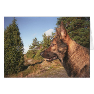 Watch Dog Card