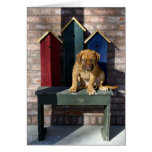 Watch dog greeting cards