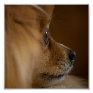 Watch dog print