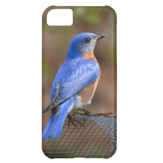 Watch the Bluebird bring Happiness! iPhone 5C Case