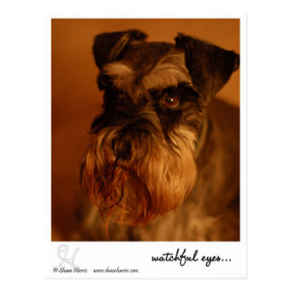 watchful eyes.. postcard