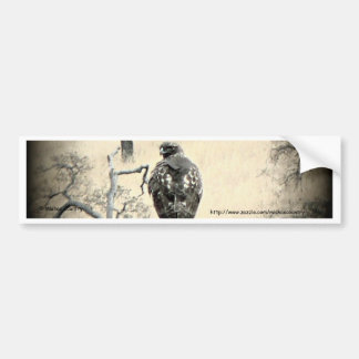 Watchful Hawk Bumper Sticker