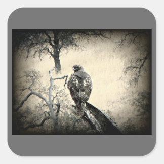 Watchful Hawk Square Sticker