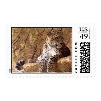 Watchful Leopard Stamp