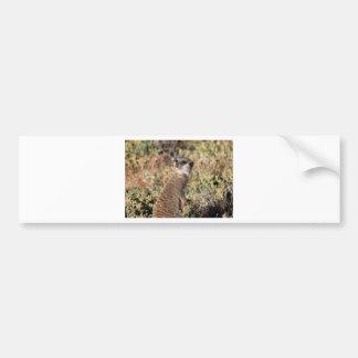 Watchful meerkat bumper sticker