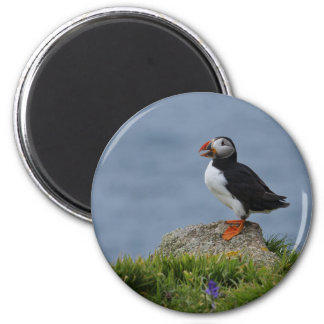 Watchful Puffin Magnet