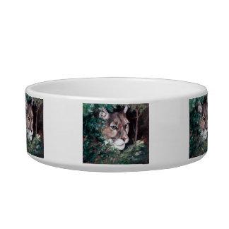 Watching Cougar Pet Bowl