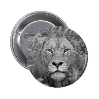 Watching Lion, South Africa Buttons