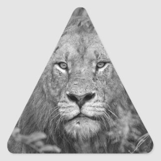 Watching Lion, South Africa Triangle Stickers