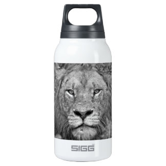 Watching Lion, South Africa Thermos Bottle
