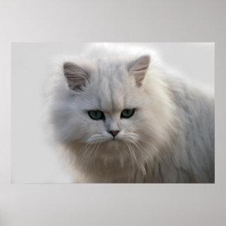 Watching little kitten poster