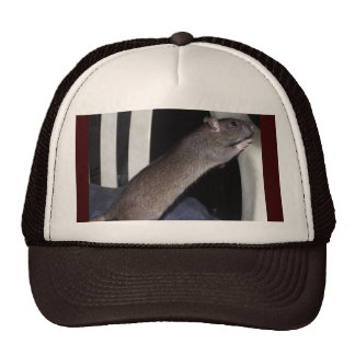 WATCHING RAT HAT