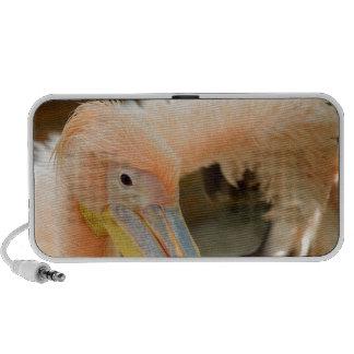 Watching You Pelican Doodle Speaker