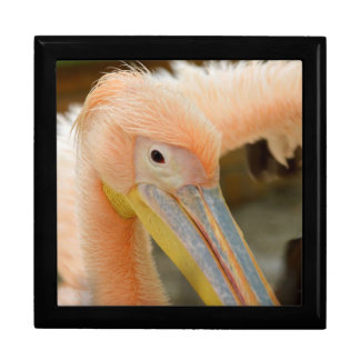 Watching You Pelican Gift Box